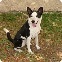 Adopt A Pet :: Neko - Oviedo, FL