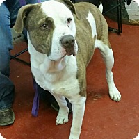 Adopt A Pet :: Hurk - Florence, IN