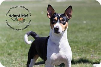 Basenji Mix Dog for adoption in Lucknow, Ontario - BEN- adoption pending