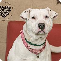 Adopt A Pet :: Gia - Inglewood, CA