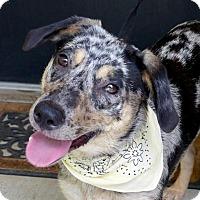Adopt A Pet :: June - Baton Rouge, LA
