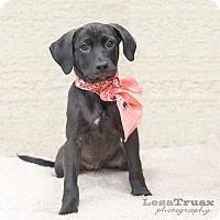 Adopt A Pet :: Eden - Frisco, TX