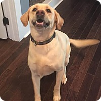 Adopt A Pet :: Chico - Huntsville, AL