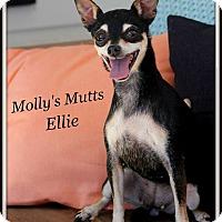 Adopt A Pet :: Ellie - Dixon, KY