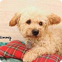 Adopt A Pet :: Sammy (GrandPaws) - Lindsay, CA