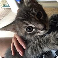 Adopt A Pet :: mister - Mesa, AZ