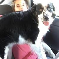 Adopt A Pet :: Tripp - Newport, KY