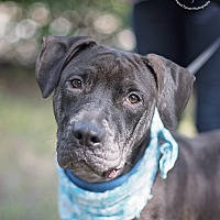 Adopt A Pet :: Fernando - Kingwood, TX