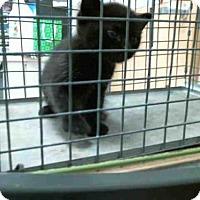 Adopt A Pet :: BATMAN - Plano, TX
