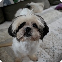 Adopt A Pet :: Finnegan - Long Beach, NY
