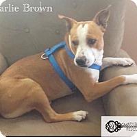 Adopt A Pet :: Charlie Brown - DeForest, WI