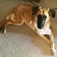 Adopt A Pet :: Chena - Dallas, TX