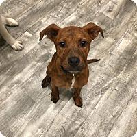Adopt A Pet :: Aggie - Nyack, NY