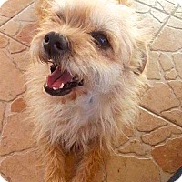 Adopt A Pet :: Valentina - san diego, CA