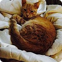 Adopt A Pet :: Glinda - Strongsville, OH