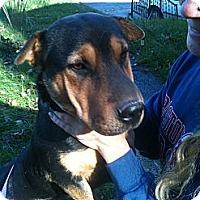 Adopt A Pet :: Luna - Newport, VT