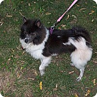 Adopt A Pet :: NIKKI - Hesperus, CO