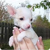 Adopt A Pet :: Tramp - Hilliard, OH