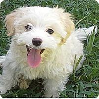 Adopt A Pet :: Oscar - San Dimas, CA