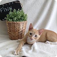 Adopt A Pet :: Finn - Coral Springs, FL