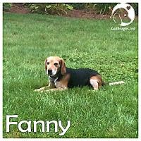 Adopt A Pet :: Fanny - Novi, MI