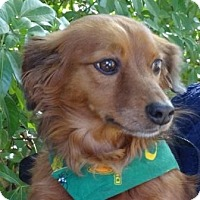 Adopt A Pet :: BARNABY - Portland, OR
