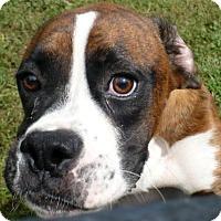 Adopt A Pet :: Jerry - Brentwood, TN