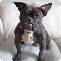 Adopt A Pet :: Yoda - Drumbo, ON