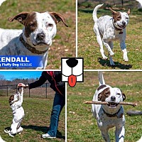 Adopt A Pet :: Kendall - Enfield, CT