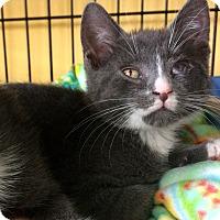 Adopt A Pet :: Remy - Island Park, NY
