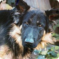 Adopt A Pet :: KURT VON JURGENS - Los Angeles, CA