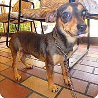Adopt A Pet :: Bruce - Encino, CA