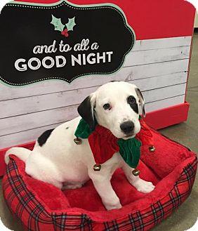 Labrador Retriever Mix Puppy for adoption in Monroe, Georgia - Champ