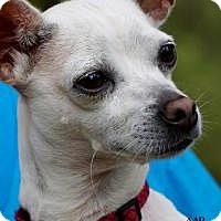 Adopt A Pet :: Minnie - Tomball, TX