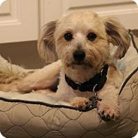 Adopt A Pet :: Clay - Kennesaw, GA