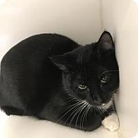 Adopt A Pet :: Kenzi - Reisterstown, MD