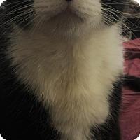 Adopt A Pet :: PANDA - Corona, CA