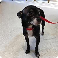 Adopt A Pet :: Prada - Memphis, TN