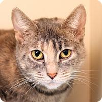 Adopt A Pet :: BIANCA - Royal Oak, MI