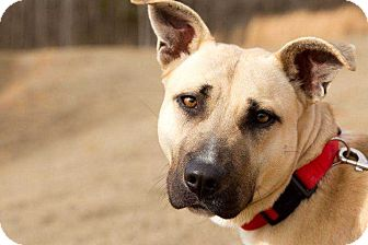 Shepherd (Unknown Type) Mix Dog for adoption in Lexington, Tennessee - Miss Prissington