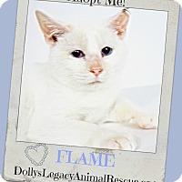 Adopt A Pet :: FLAME - Lincoln, NE
