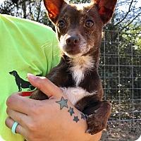 Adopt A Pet :: Panda - Fort Valley, GA