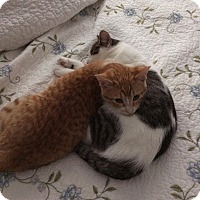 Adopt A Pet :: Clarence and Cady - Frankfort, IL
