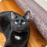 Adopt A Pet :: Ryder - Statesville, NC