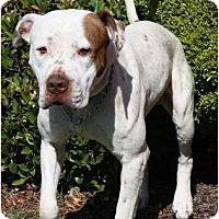 Adopt A Pet :: Benny - Meridian, MS