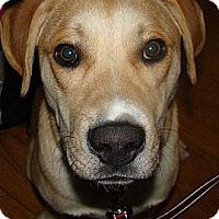 Adopt A Pet :: Axel - Saskatoon, SK