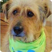 Adopt A Pet :: Doogie - Mission Viejo, CA