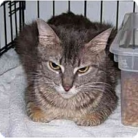 Adopt A Pet :: Emma - Syracuse, NY