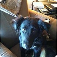 Adopt A Pet :: Kira - Murfreesboro, TN