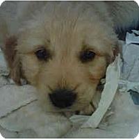 Adopt A Pet :: Kipling - Cumming, GA